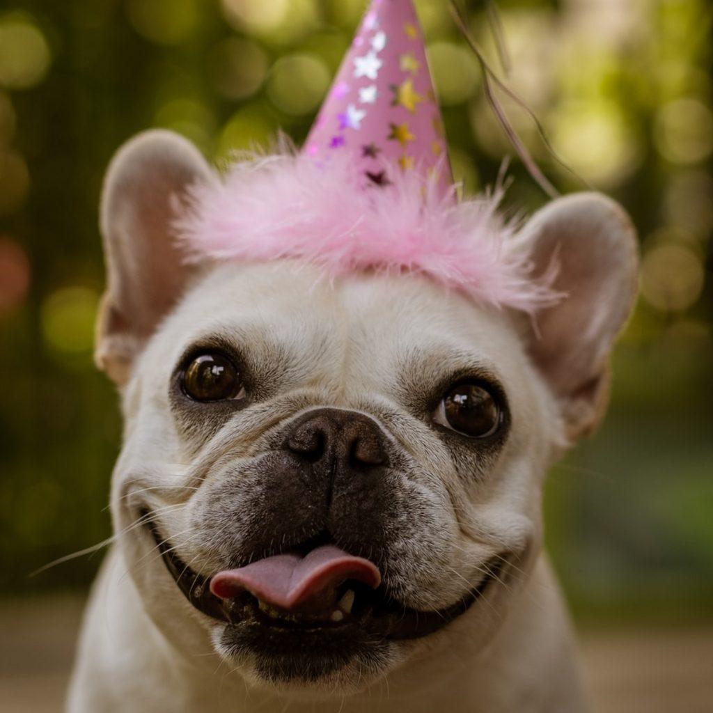 A Dogs Birthday