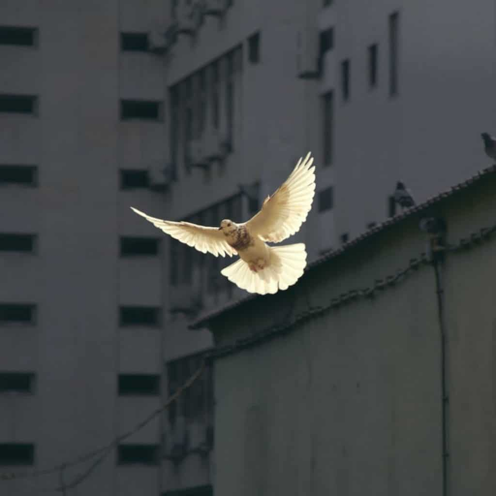 Dove, Spirit